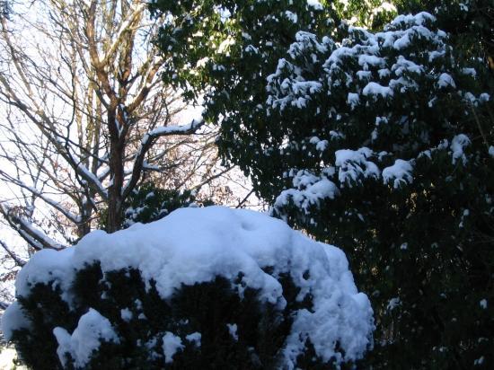 neige19/12/09