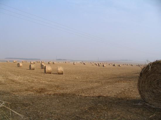 champs à Tremblay
